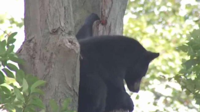 Environmental Officials Issue Warning About Hungry Bears