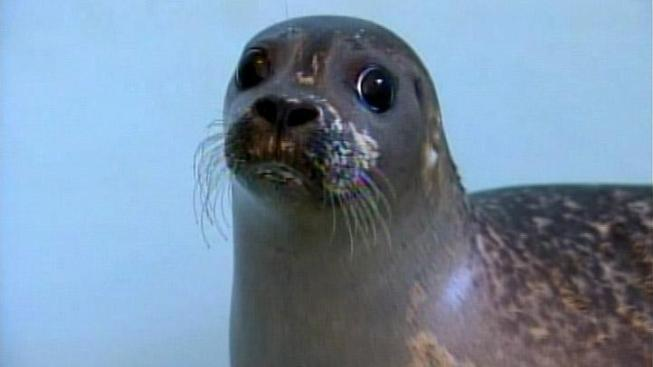 Officials: No Selfies With Seals This Summer