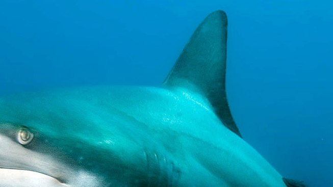 Rhode Island Becomes the 11th State to Ban Sale of Shark Fins