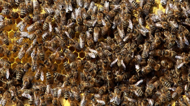 Tens of Thousands of Bees Found in Library Pillar