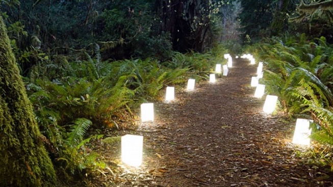 Spend a Peaceful Evening in the Calif. Redwoods
