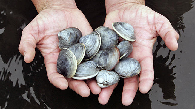 Maine Issues Mussel, Clam Recall