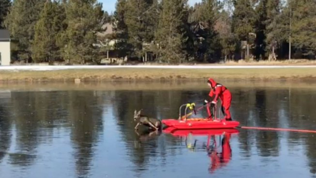 Red-Suited Man on a Sled Rescues a Deer on Frozen Pond