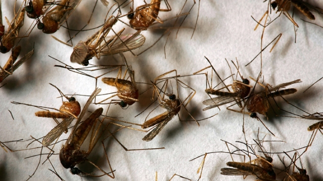 Mosquitoes in Conn. Test Positive for West Nile Virus