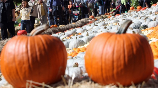 Lakes Region Chamber of Commerce Planning Pumpkin Fest