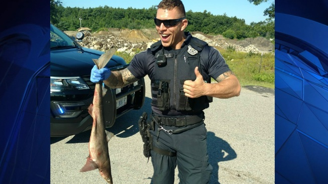 Sharks in the Street? NH Police Officers Make Bizarre Discovery