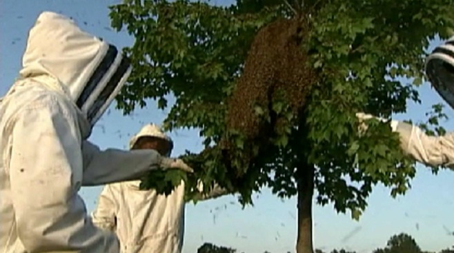 Attleboro Father Dies After Being Attacked by Swarm of Bees