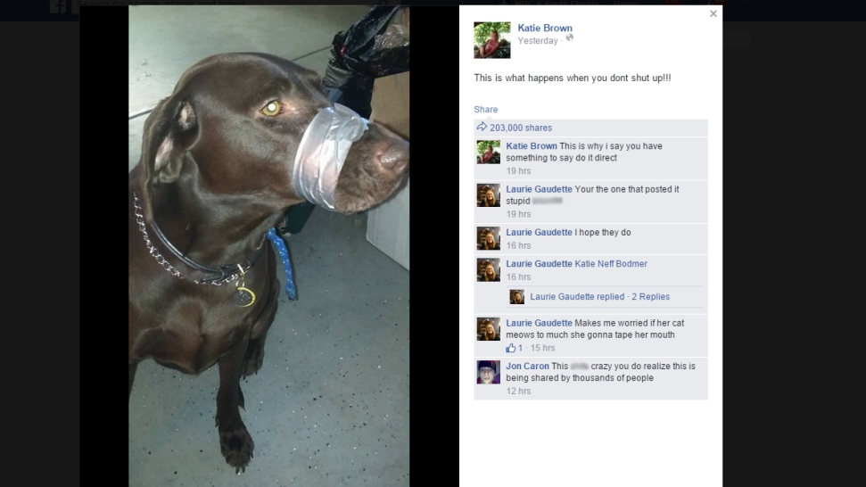 Woman Appears in Court Over Facebook Photo of Duct-Taped Dog