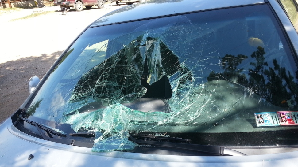 Bear Breaks Into Ex-Teacher's Car, Wrecks Windshield